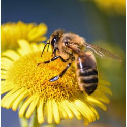 Для пчеловодов