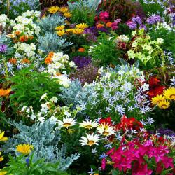 Для садоводов